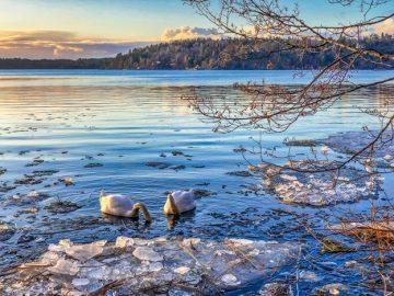 A beautiful lake with ducks