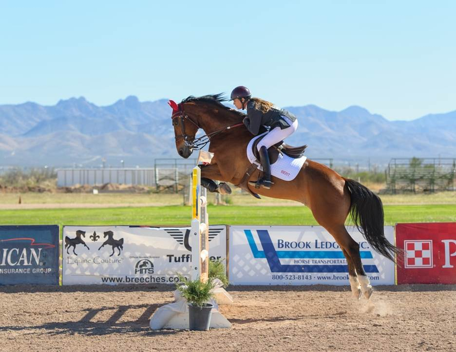 Horse jumping over the fence